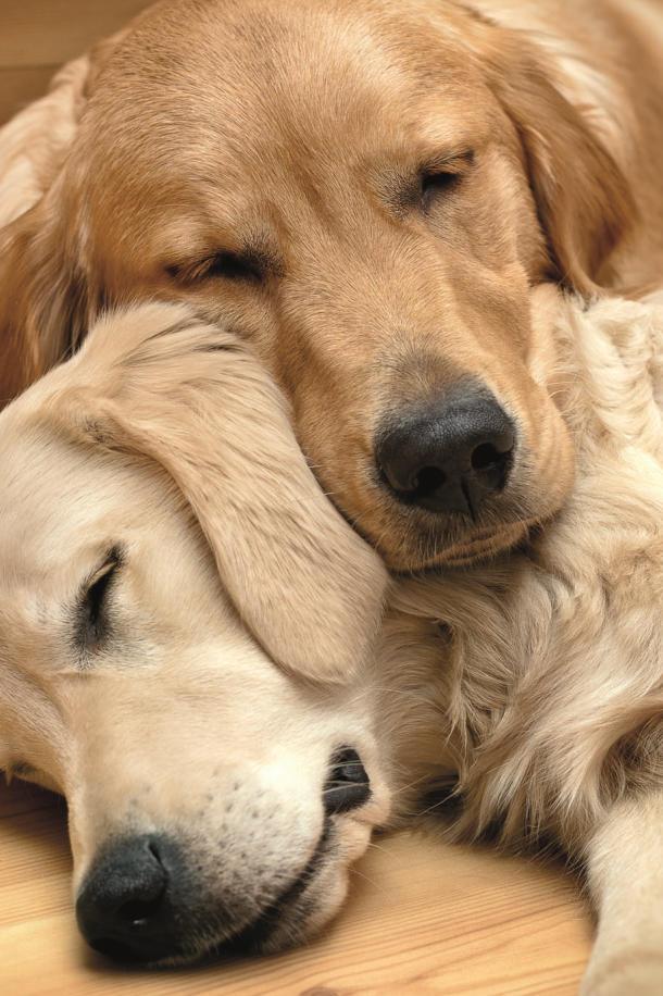 beschwichtigungssignale beim hund züngeln